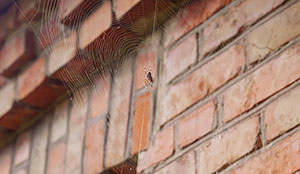 Are Spiders Dangerous in Portland OR- Vancouver - Longview - Kelso WA