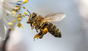 Identifying when you have a bee issue in Portland OR - Vancouver - Longview - Kelso WA