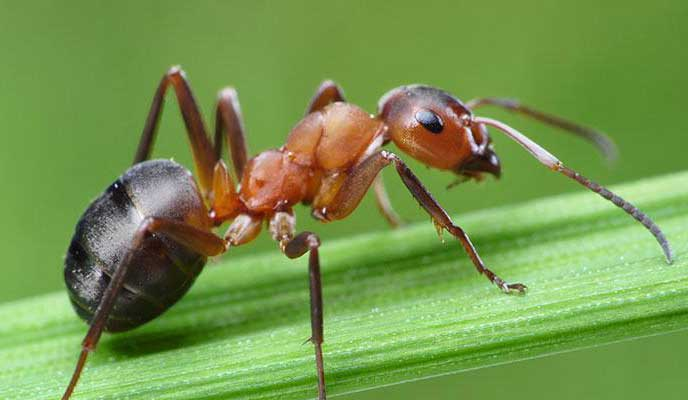 Ant Exterminators - Control - Removal in Portland OR and Vancouver WA