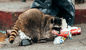 Wildlife Exclusion by Interstate Pest Management -Serving Portland - Vancouver - Longview - Kelso