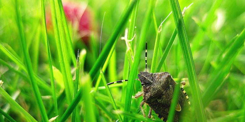 Small insect in the grass. Interstate Pest Management serving Portland OR & Vancouver WA talks about Common Fall House Pests (and How to Prevent Them).